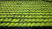 青苔湿风化的顶板 — 图库照片