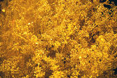 Golden flowers — Stock Photo