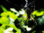 Spider on a web — Stock Photo