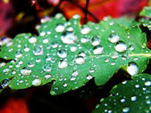 Drops on leaf — Stock Photo