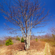Lone tree along a mountain trail - Stock Photo