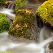 Moss and Rocks in a Mountain Stream — Stock Photo