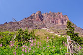 Wildflowers and a Mountain Peak — Stock Photo