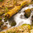 A mountain stream in the spring — Stock Photo