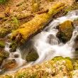 A mountain stream in the spring — Stock Photo #8214047
