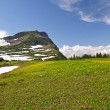High Alpine Meadow in the Summer — Stock Photo