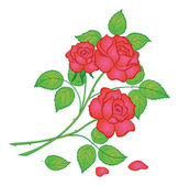 Flowers red rose — Stock Vector