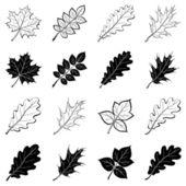 Las hojas de las plantas, siluetas, establecer — Vector de stock