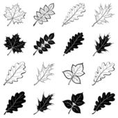 Leaves of plants, silhouettes, set — Vector de stock