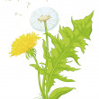 Flowers dandelions with leaves — Stock Photo