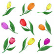 Stock Photo: Flower tulips, set