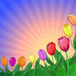 Flower background, tulips — Stock Photo