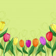 Flowers tulips on a green — Stock Photo