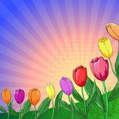 Kwiat tło, tulipany — Zdjęcie stockowe