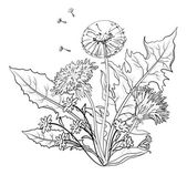 Kwiaty mniszek z liści, kontury — Zdjęcie stockowe
