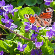 Colorful butterfly on flowers — Stock Photo