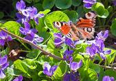 красочные бабочки на цветы — Стоковое фото