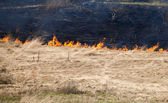 Fire on dry grass — Stock Photo