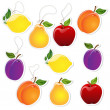 Fruit Labels — Stock Vector #9591486