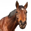 Brown horse — Stock Photo #9942550