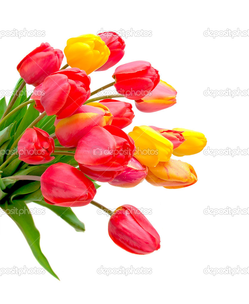 Tulips of different colors on a white background close-up — Stock Photo #10375821