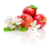 Flowers of apple and red apple on a white background — Stock Photo