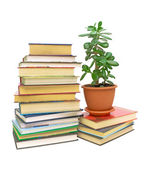 Books and a green plant (Crassula) on a white background — Stockfoto