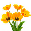 Bouquet of tulips on a white background — Stock Photo #8602553