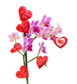 Blooming orchids and Valentines on a white background — Stock Photo