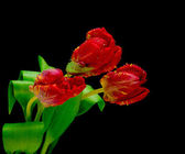 Bouquet of tulips on a black background — Stock Photo