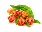 白地にチューリップの花束 — ストック写真