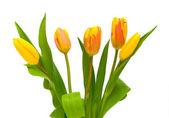 Mooi boeket van tulpen op een witte achtergrond — Stockfoto