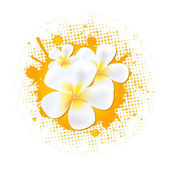 Flower Background With Frangipani — Stock Vector