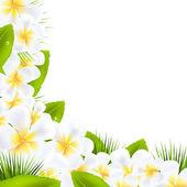 Frangipani bloemen grenzen met blad — Stockvector