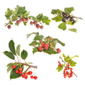 Collection of garden berries — Stock Photo