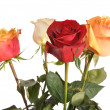 Multi-coloured roses — Stock Photo #9875306