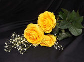 Yellow roses lay on a black — Stockfoto