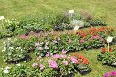 Kleine töpfe mit pflanzen für die bepflanzung im garten — Stockfoto
