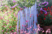 Blue wooden barrier with multicolored flowers of spring — Stock Photo
