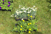 Small pots of plants for planting in the garden — Stock Photo
