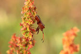 Bug, bedbug brown on the delicate flower in summer — Stock Photo