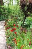 Flower garden in spring — Stock Photo