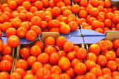 Display tomato — Stock Photo