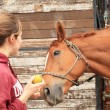 Beautiful women give an apple to her horse — Stockfoto