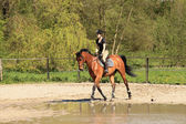 красивые equestrienne на коричневые лошади в летнее время — Стоковое фото