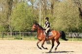 Yaz aylarında kahverengi at üzerinde güzel binici — Stok fotoğraf