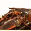 Stock Photo: Live lobsters on algae and white background