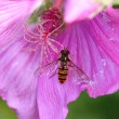 Fly on a flower — Stok fotoğraf