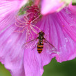 Fly on a flower — Lizenzfreies Foto