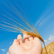 Gold harvest in hand — Stock Photo #10116501